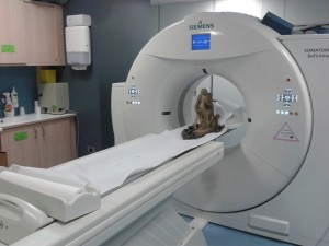 ct-scan sculpture